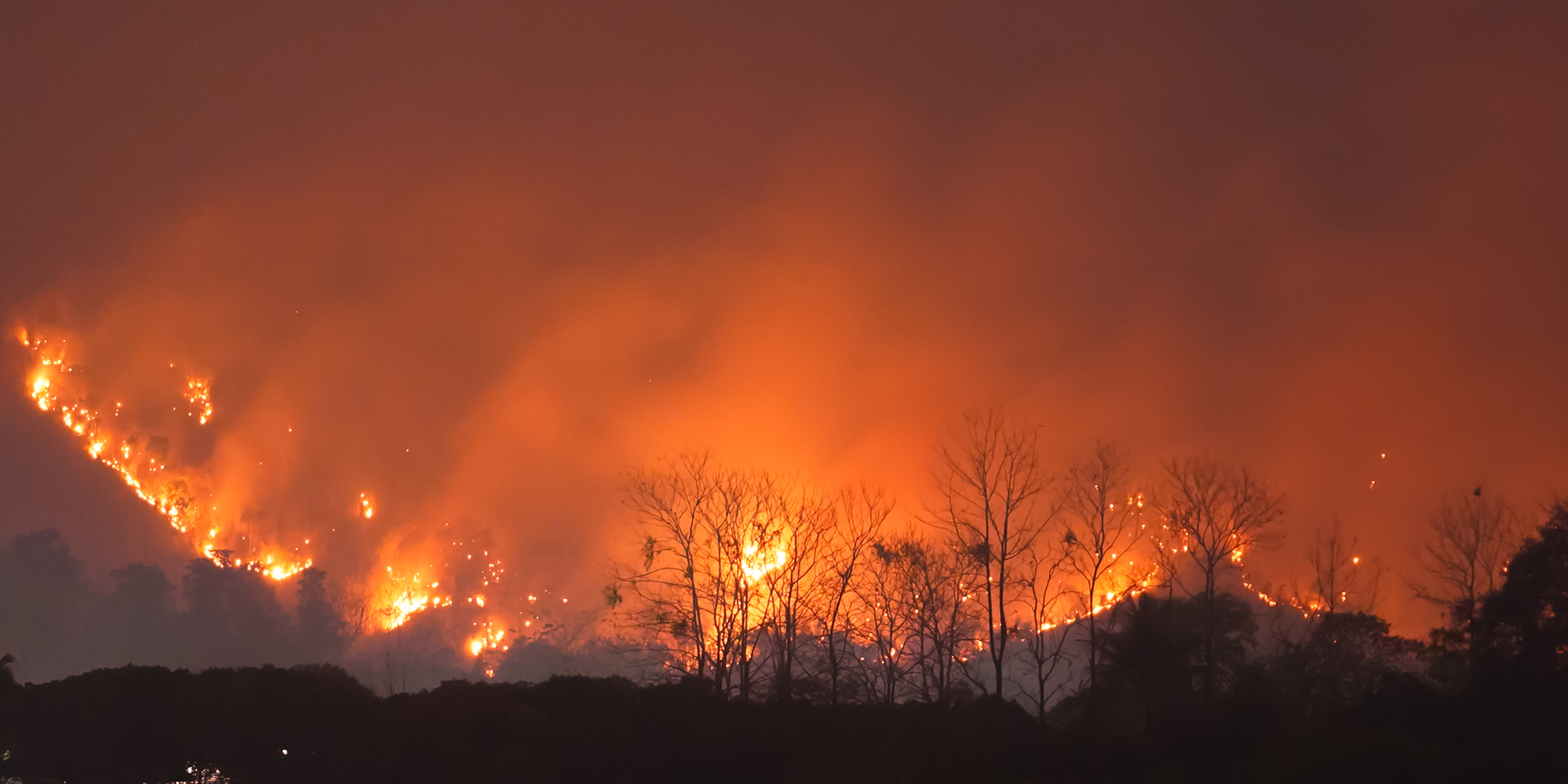 Forest Fire at Night.Wildfire burning forest trees in the mountain.Wildfire caused by humans.