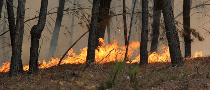 Wildfire burning through a wooded area