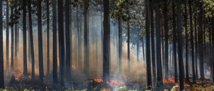Highly detailed image of wildfire, fire in a forest.